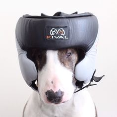 I'll never be a boxer - Photo: Courtesy of Neville Jacobs / @nevillejacobs