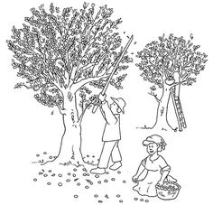 Olive Tree Coloring Page Sketch Coloring Page