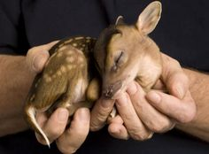 Funny pictures about Just In Case Your Day Needs More Baby Deer. Oh, and cool pics about Just In Case Your Day Needs More Baby Deer. Also, Just In Case Your Day Needs More Baby Deer photos. Cute Baby Animals, Animals And Pets, Funny Animals, Wild Animals, Newborn Animals, Newborn Babies, Small Animals, Top 10 Cutest Animals, Foster Animals