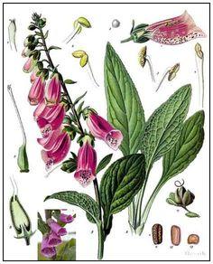 70 Mejores Imágenes De Plantas Peligrosas Plants Poisonous Plants