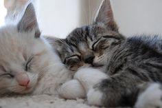 kitty's.