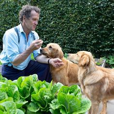 During our June issue cover shoot we asked @theMontyDon what it's like to be upstaged by pets... See what he had to say on our website link in bio Look out for our special collector's edition celebrating 50 years of Gardeners' World on TV out now #gardenersworld #gw50