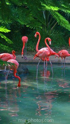 Flamingos in Bermuda by Irina Mia- book your next trip at www.triptopia.info