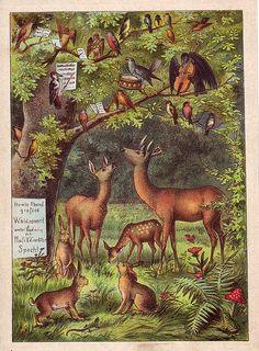 A delightful and charming vintage woodland illustration... (art, deer, forest, German)