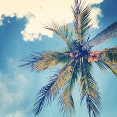 look up: palm tree #vacation #tropical #travel