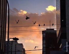 Artería, Curitiba, PR
