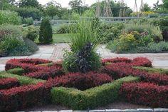 Knot garden using Buxus sempervirens 'Suffructicosa' entwined with Berberis thunbergii 'Atropurpurea Nana'