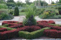 Knot garden-barberry and....