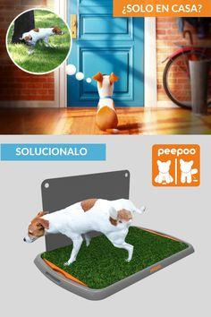 Cute Corgi Puppy, Dog Playpen, Dog Gadgets, Panda Funny, Pet Corner, Dog Urine, Dog Potty, Dog Pee, Animal Room