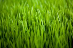 """Green Grass Template for PowerPoint is a great effect for PowerPoint presentations requiring high quality grass background in the slide design as well as grass effect on the presentation background """"PowerPoint Design"""" Free Powerpoint Templates Download, Powerpoint Template Free, Powerpoint Presentation Templates, Microsoft Powerpoint, Powerpoint Presentations, Powerpoint Themes, Templates Free, Green Grass Background, Powerpoint Slide Designs"""