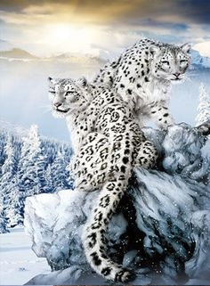 TripStan Home Wall Art Decor Lenticular Pictures, Big Beast Collection Holographic Flipping Images, inches Animal Poster Painting, Without Frame, Plateau Snow Leopard Big Cats, Cats And Kittens, Snow Leopard Wallpaper, Animals Beautiful, Cute Animals, Lion And Lioness, Winter Cat, Lion Painting, Cat Jokes