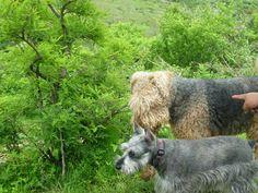 En el Cerro con Stella...