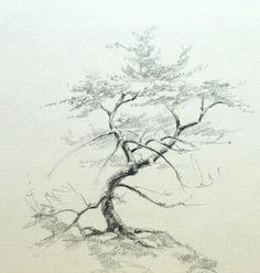 The pencil drawings of oak trees or pine trees can be done if you have just observed the peculiar features of these trees. Description from fineartblogger.com. I searched for this on bing.com/images