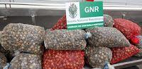 O Palhetas na Foz: GNR da Figueira da Foz apreendeu ontem 354 quilos ...