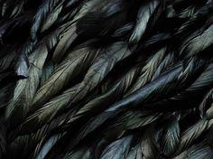 Bantam feathers -- different bird, same iridescence.