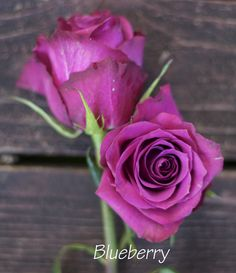 Blueberry Roses