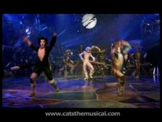 Jellicle cats and dogs all must jellicles come to the jellicle jellicles come to the jellicle ball pinterest cat and dog stopboris Choice Image