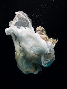 美しすぎる「幻想に咲く花」水中撮影の先駆者が捉えた神秘的な世界 21選:DDN JAPAN