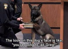 Funny Animal Pictures Of The Day – 22 Pics                                                                                                                                                                                 More #policememes
