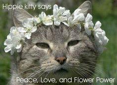 Hippie Kitty Says ...