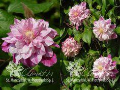Долина роз каталог