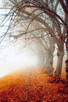 99 Amazing Pictures of Autumn Idyll – Part 1, Foggy Morning