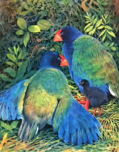 Takahē (Porphyrio hochstetteri) is a flightless bird indigenous to New Zealand and belonging to the rail family.