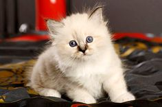 Bringing home a new kitten? Expert advice on helping your cat feel safe, secure and happy with the other humans and pets in the household.