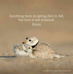 #Rumi #Rumism