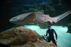 En apnée au milieu des requins pour plaider leur cause
