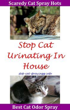 Male Or Female Cat Caution Cat Butt Cats Pinterest