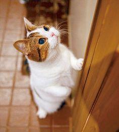 『全国猫カフェ推し猫総選挙 エリア代表編』結果発表! | いぬのきもち・ねこのきもち