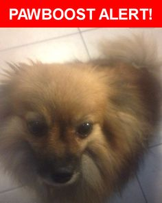 Please spread the word! Foxy was last seen in Brooklyn, NY 11210.  Description: She's and good friendly dog ,been with the family for 8 yrs and is really missed,she was stolen on 10/13/2016 @ around 8-8:30 am  Nearest Address: 20 Hubbard Place, Brooklyn, NY 11210, United States