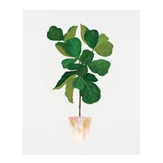 Fiddle Leaf Fig Tree Print – Our Heiday