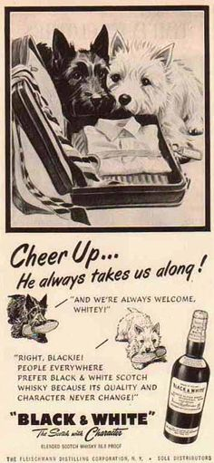 Chiens 'Whisky Black & White' - Publicité Vintage - 1952