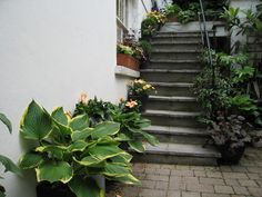 A basement garden - Traditional - Patio - London - by Silva Landscapes Basement, Landscapes, Patio, London, Traditional, Garden, Plants, Paisajes, Garten