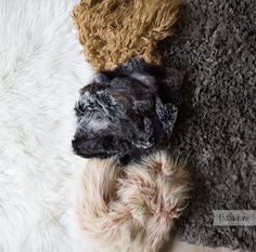 Furs Newborn Session, Furs, Photos, Pictures, Fur, Feathers