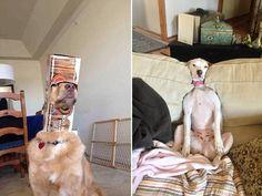 Dog (45 Photos) (19)