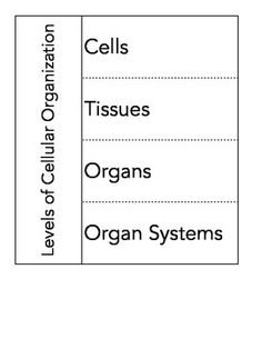 The Wright Ladies present the Levels of Cellular Organization Graphic Organizer. This great resources is the perfect way to teach your students the various levels. Graphic organizer is perfectly sized to fit in a composition notebook.  Included in this download are editable and PDF versions of the graphic organizer, an answer key and a simple powerpoint.