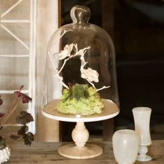 Shop the Project: Porcelain Flower Cloche in New Trending Shop the Project at Terrain