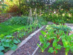 Jak jest ogród, to muszą być i warzywa
