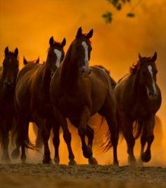 horses against the sunrise...