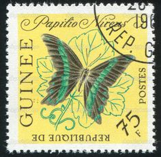 GUINEA - CIRCA 1972: stamp printed by Guinea, shows butterfly, circa 1972. — Photo by rook76