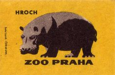 Prague Zoo: hippopotamus by oliver tomas