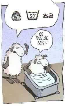 Moutons au bain
