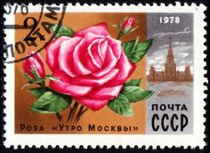 Soviet Postage stamp ; Rose