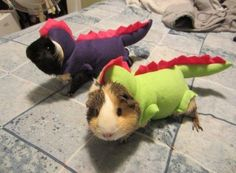 funny, funny pictures, funny photos, funny dogs, funny cats, cat, dog, halloween, pet costume, 25 Pets That Are Totally Ready for Halloween