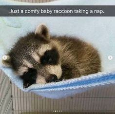 35 Adorable and Cute Sleeping Animals - 35 Adorable and Cute S. - - 35 Adorable and Cute Sleeping Animals – 35 Adorable and Cute S… 35 Adorable and Cute Sleeping Animals – 35 Adorable and Cute Sleeping Animals - Funny Dog Captions, Funny Animals With Captions, Funny Animal Photos, Funny Animal Memes, Cute Animal Pictures, Cute Funny Animals, Cute Baby Animals, Cat Memes, Animals And Pets