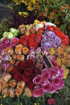 France, Paris, Colorful Rose Flowers By Keenpress