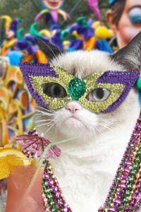 Grumpy Cat hates parties and mardis gras